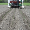 3077 Gregoire Besson Cemag leek planter 3 row