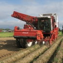 4603 Dewulf RQ3060 2 row potato harvester