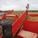 4702 Dewulf RQA3060 potato harvester selfpropelled