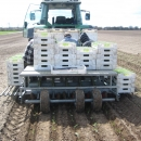 3404 Planting machine for cubes 5 row