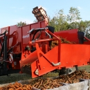 3970 DEWULF GBC carrot harvester with bunker